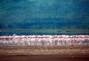 Africké jezero - spirulina, plameňáci