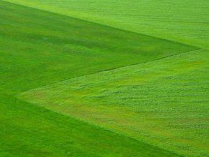 Zelená, chlorofyl