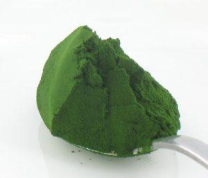 chlorella negativa