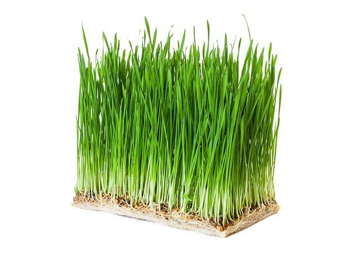 zelený ječmen RAW