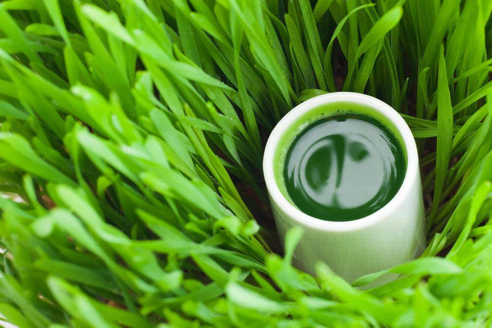 Zelený ječmen a mladá pšenice bohaté na chlorofyl