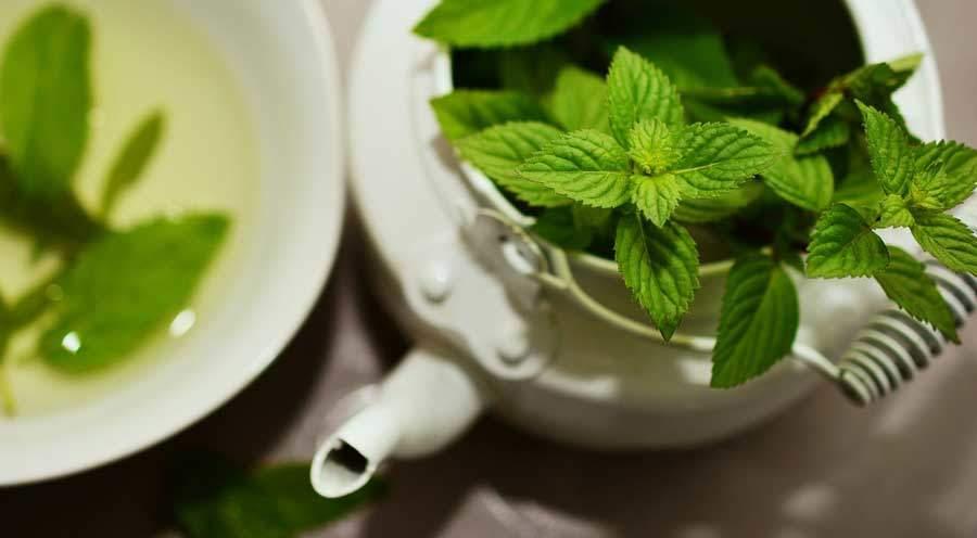 zelený čaj s mátou