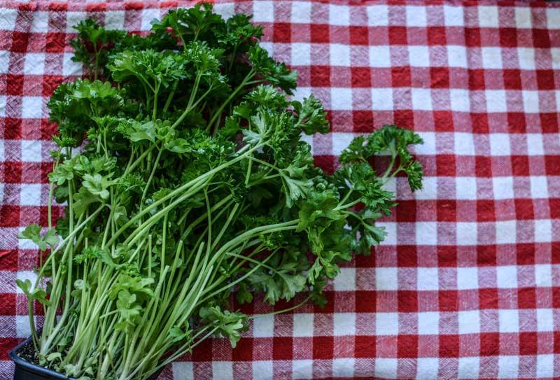 Detoxikační bylinky: petrželka