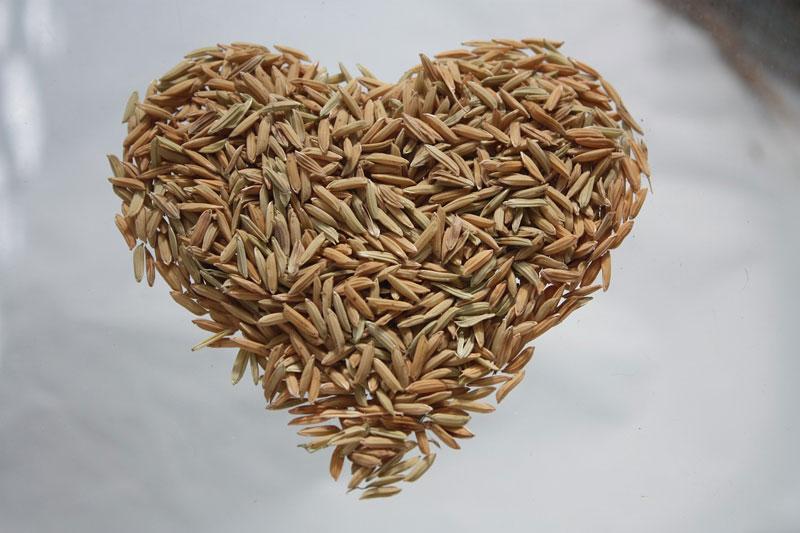 Rýžový protein je založený na rýži