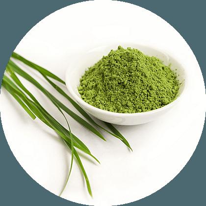 superpotravina zelený ječmen