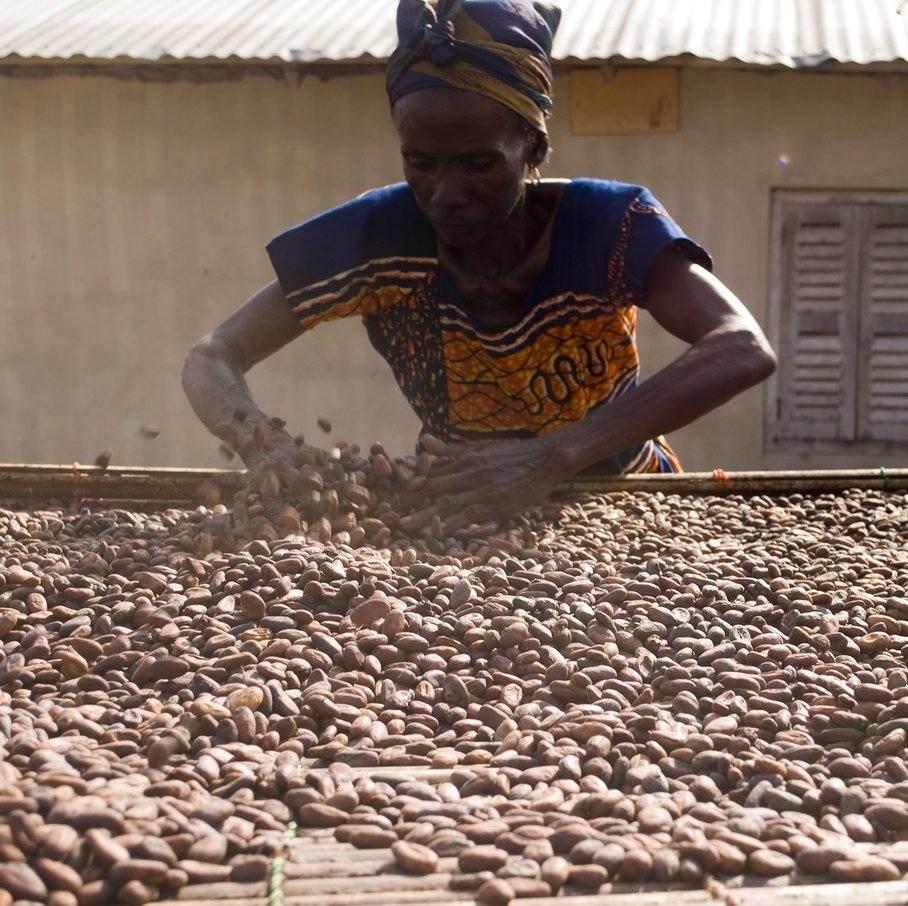 kakaové boby výroba
