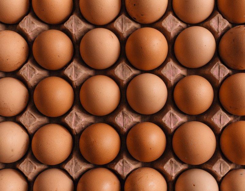 vajíčka zdroj bílkovin