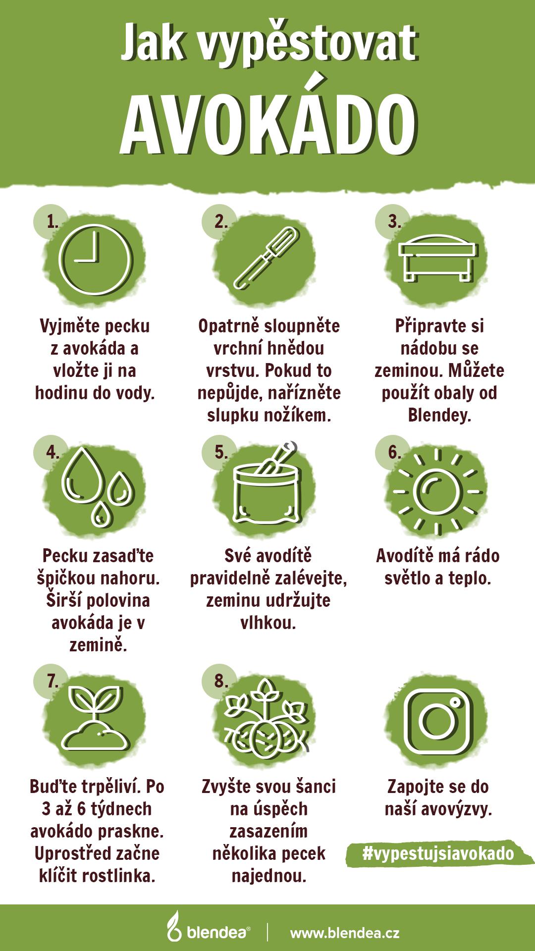 Jak si vypěstovat avokádo infografik
