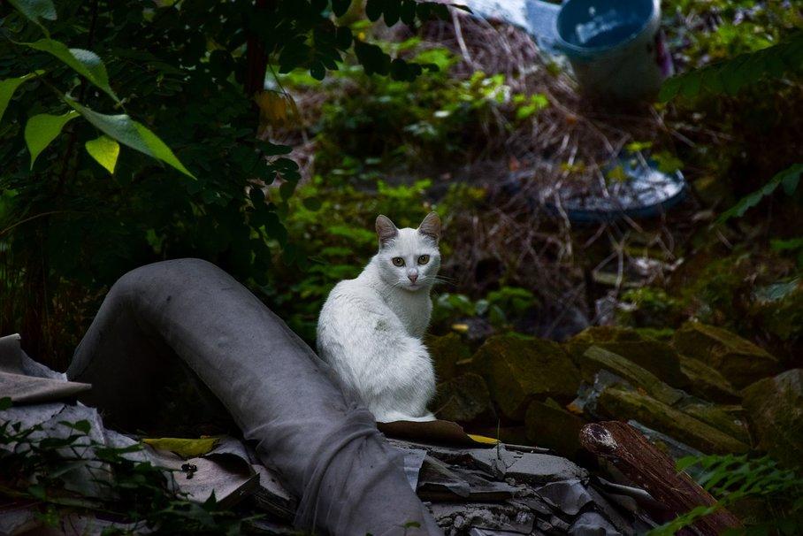 kočka a odpadky