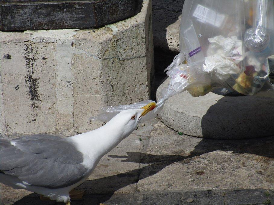 racek odpadky