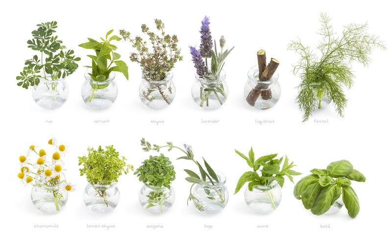 byliny pro detoxikaci plic