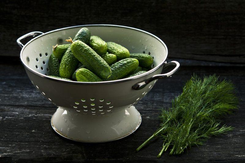 kvašené okurky, zdroj probiotik