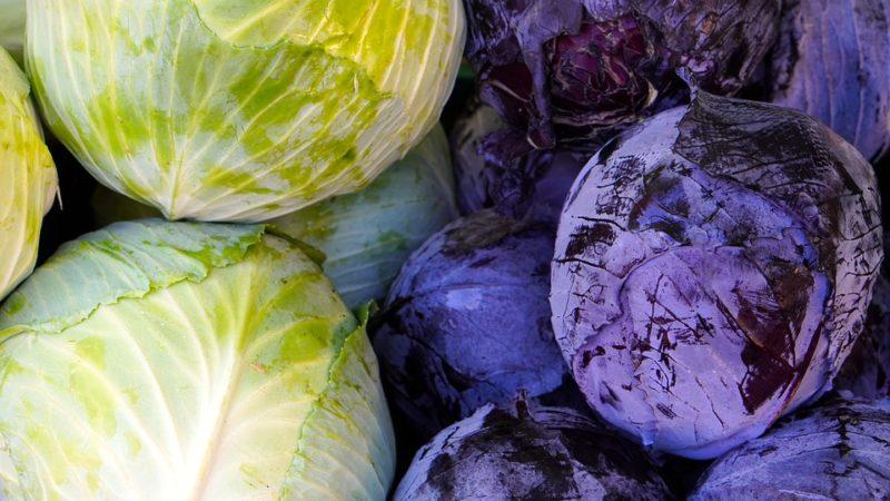 kysané zelí, zdroj probiotik