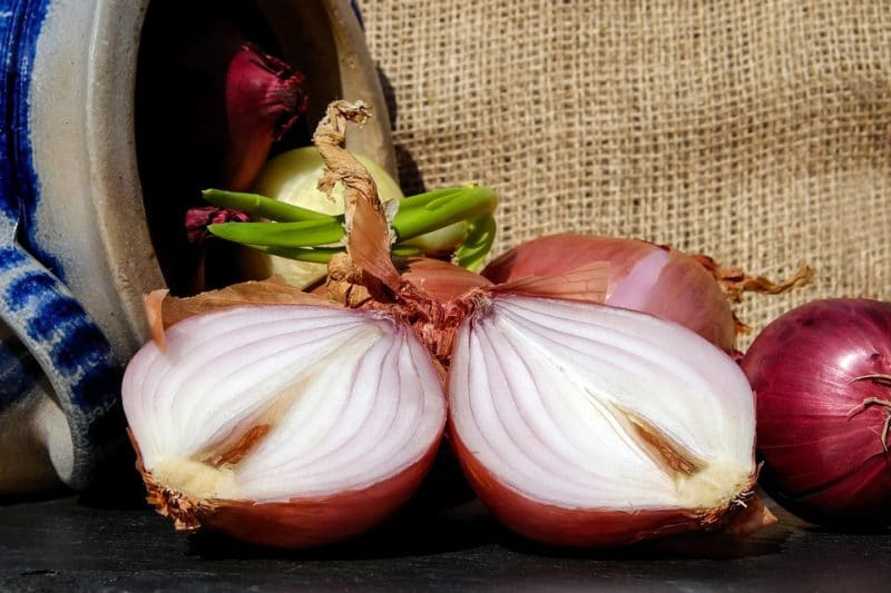 cibule, zdroj inulinu