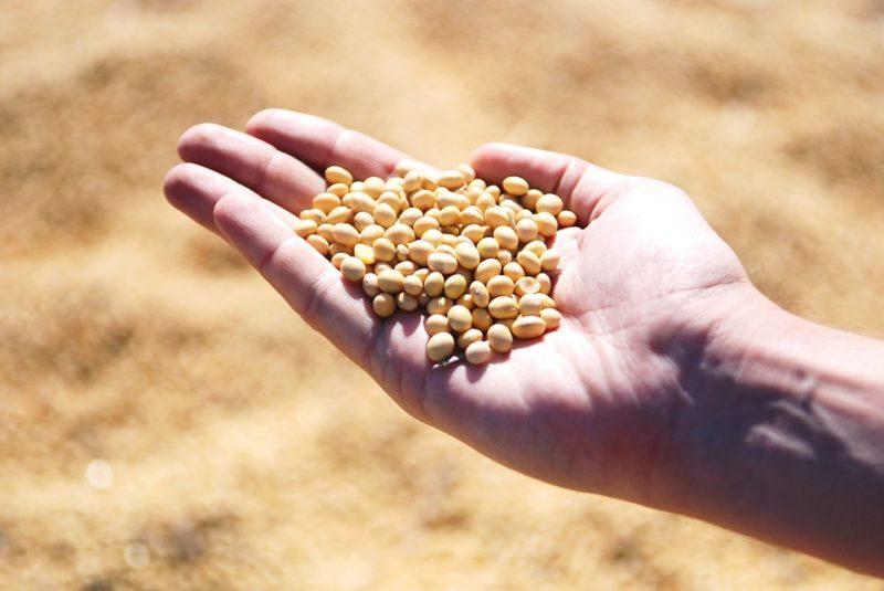 sója a tempeh, zdroje probiotik