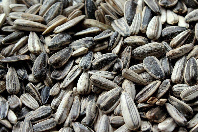 slunečnicová semena, zdroj proteinu