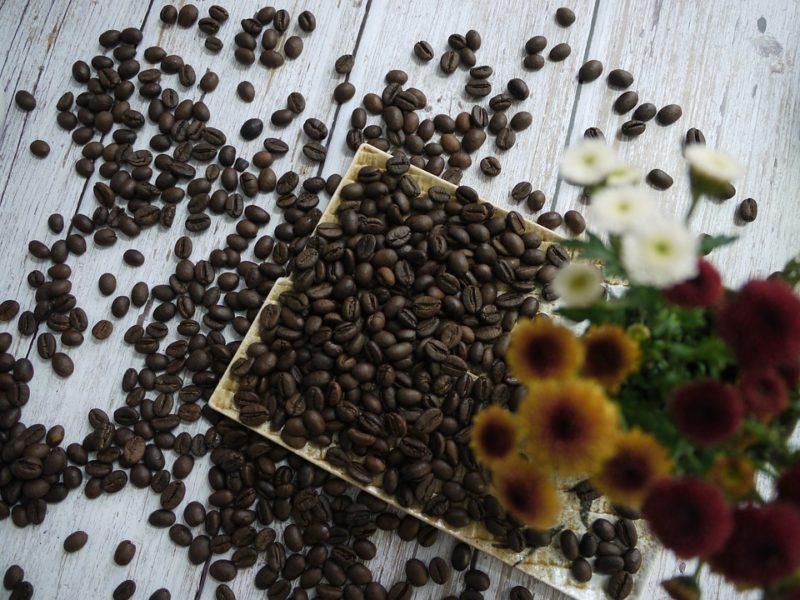 zrna kávovníku statného