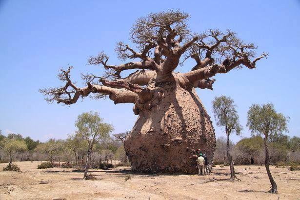 bunkr v baobabu