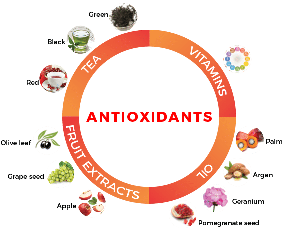 základní dělení antioxidantů