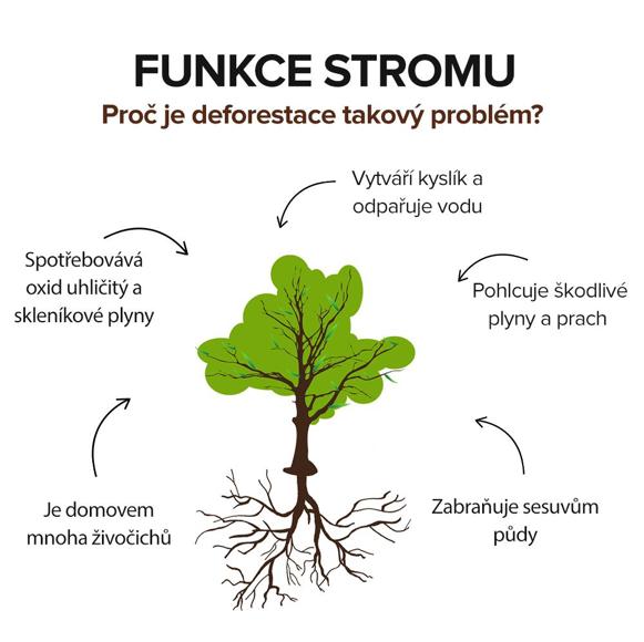 funkce stromů, deforestace