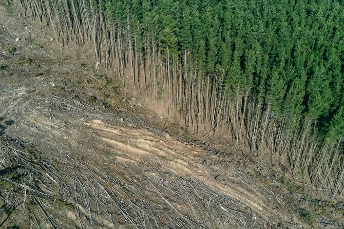 odlesňování v Česku