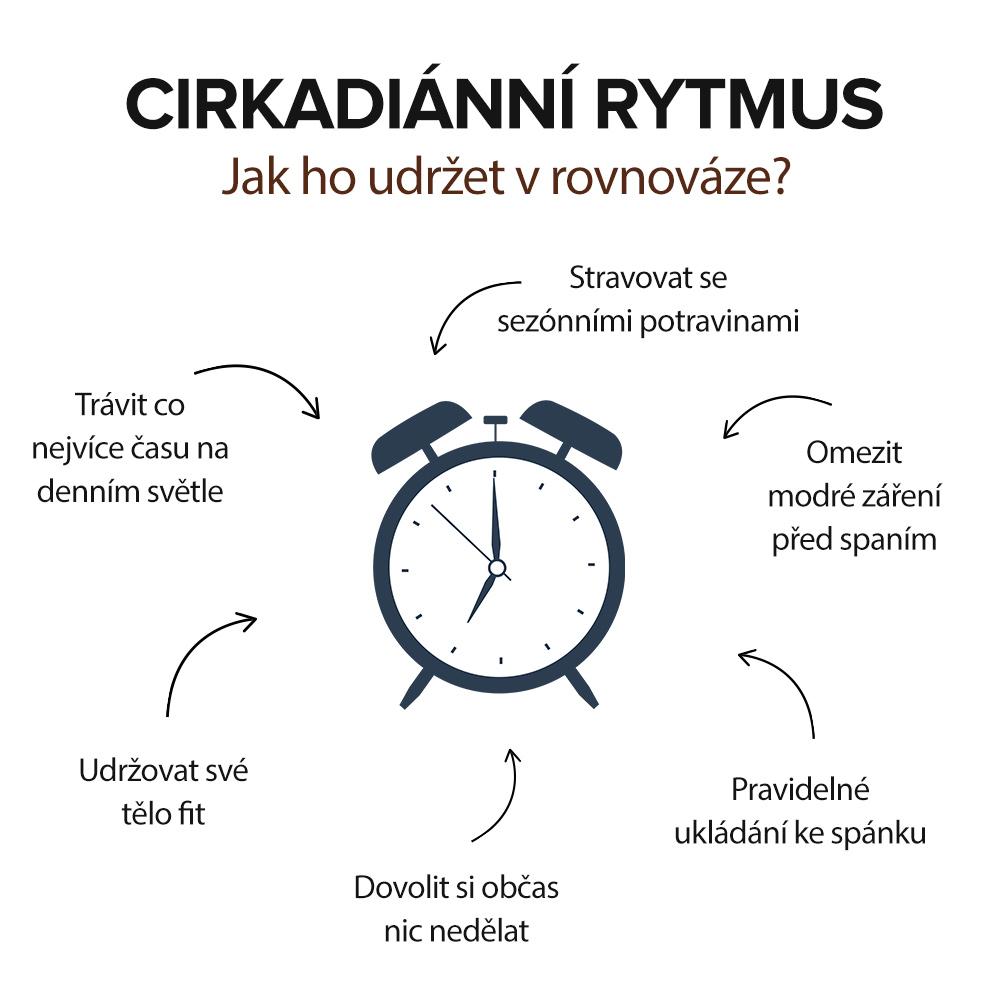 cirkadiánní rytmus