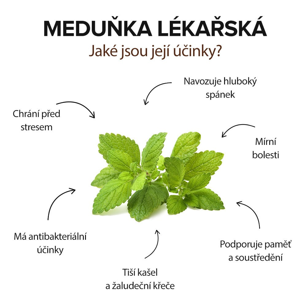 účinky Meduňky lékařské, infografika