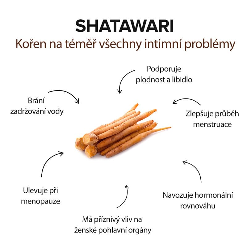 účinky shatawari